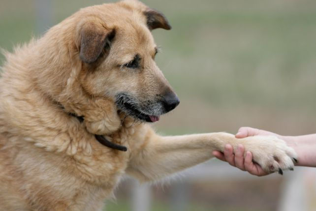 Znalezione obrazy dla zapytania ślady psich łap