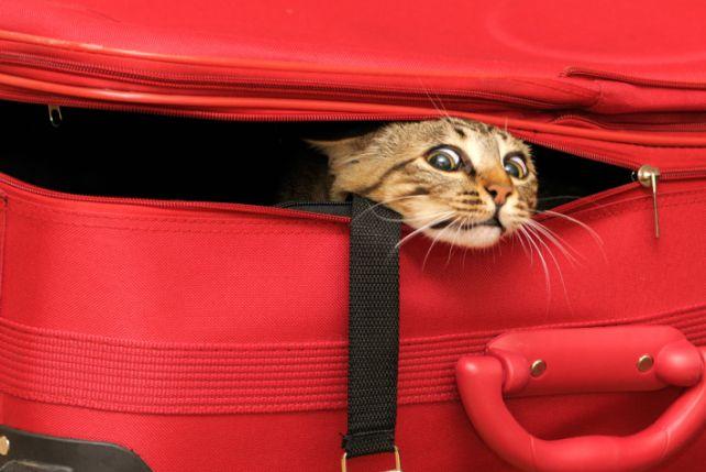 Nie wszystkie koty boją się podróży, niektóre jak Mary Jane uwielbiają poznawać okolicę