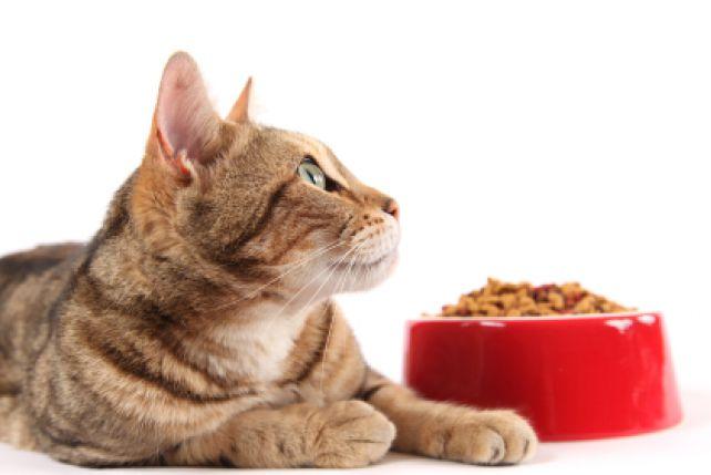Dieta kota.
