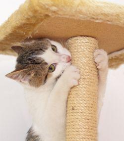 9 Oznak że Twój Kot Cię Kocha Zpazurempl