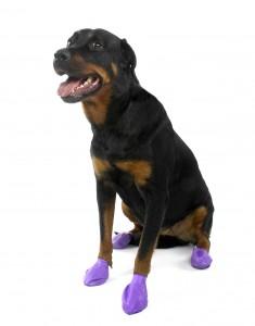 a1ab3e8b7caada Wykonane z ekologicznej gumy buty nadają się na deszcz i śnieg. Źródło: ©  Pawz Dog Boots