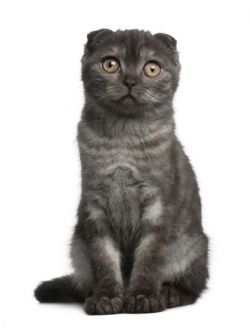 Co Ma Wspólnego Kot Z Kangurem Zpazurempl