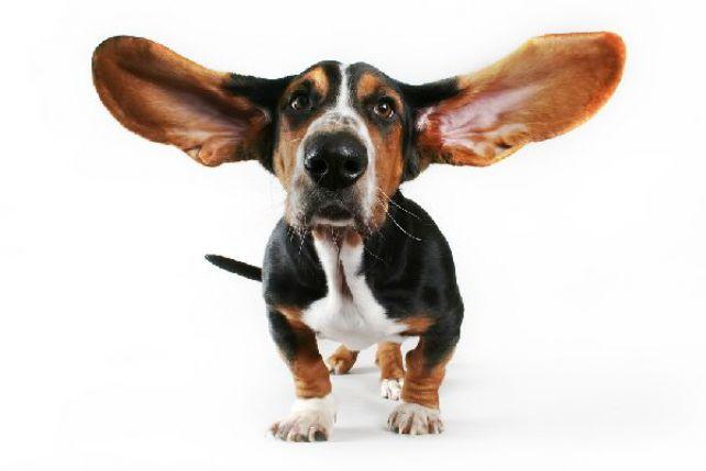 Słuch