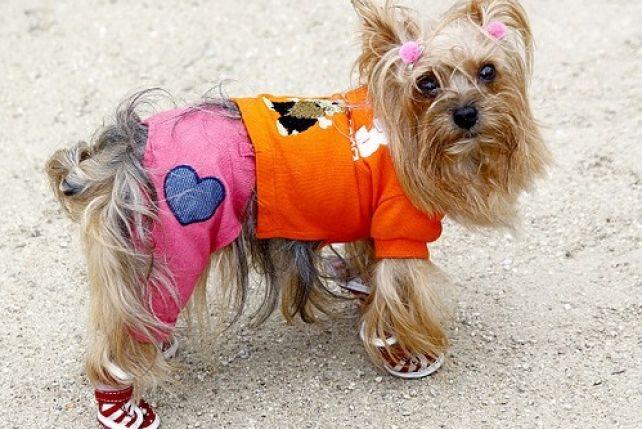 7868ac6b7034c0 Buty dla psów i jak je wybrać - ZPAZUREM.PL