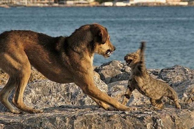 Dlaczego Pies I Kot Stali Się Wrogami Zpazurempl