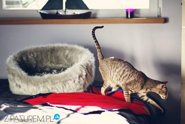 Gdy Kot Lata Z Pęcherzem Zpazurempl